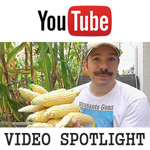 Non-GMO Corn Grown in Self-watering SIPs -YouTube Video
