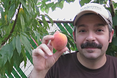 Al Gracian: Harvesting First Peach From Backyard Orchard
