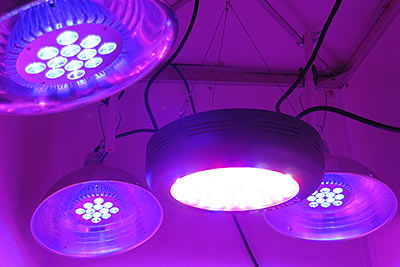 Blue Par38 Leds And Apollo Ufo Full Spectrum Grow Light
