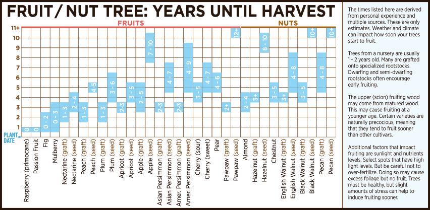 Fruit & Nut Tree Maturity Time Until Fruiting Production Chart