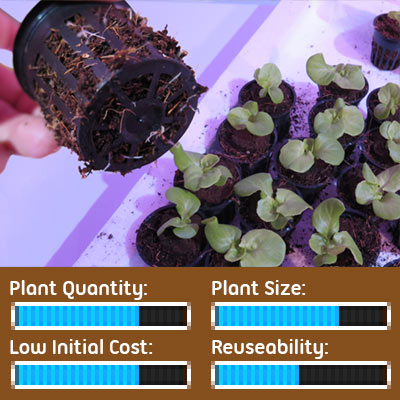 Seed Starting Options - Lettuce Seedlings Grown in Hydroponic Net Pots
