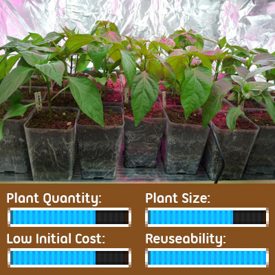 Seed Starting Options - Seedlings Grown in Individual Pots