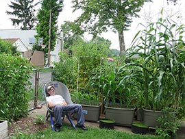 Gardening in self-watering tote containers: Organic Corn -Al Gracian