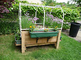 SIP Raised Planter - Growing lettuce but no peppers