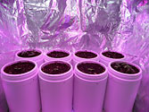 Albo-stein: Indoor self-watering salad garden Day 8
