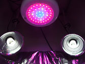 Artificial grow lights: 90w UFO LED + 4 x 26w 6500k CFLs